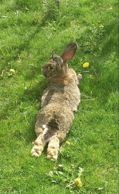 Relaxed Rabbit