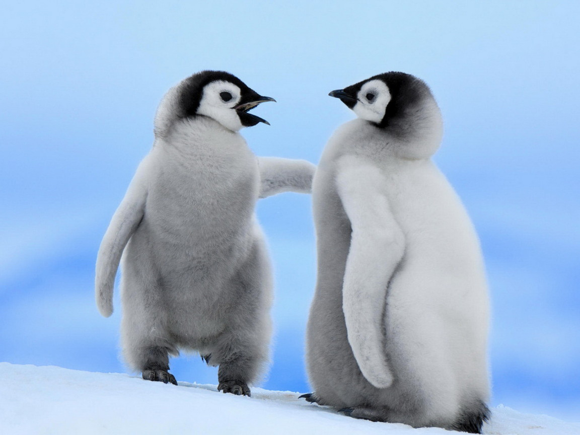 Lovely Wallpapers: Penguin Birds Cute Wallpapers