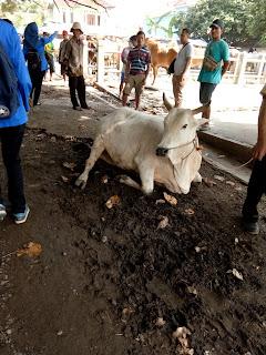 contoh hewan ternak