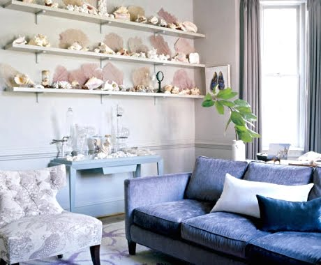 idea for coastal accent wall with shelves that display seashell and coral collection