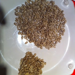 des graines a planter et deguster les graines de tournesol. Black Bedroom Furniture Sets. Home Design Ideas