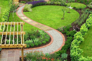 Rumput swiss | Rumput taman | solusi pertamanan