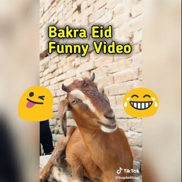 Funny Bakra Eid Video Clips { Musically Tik Tok }