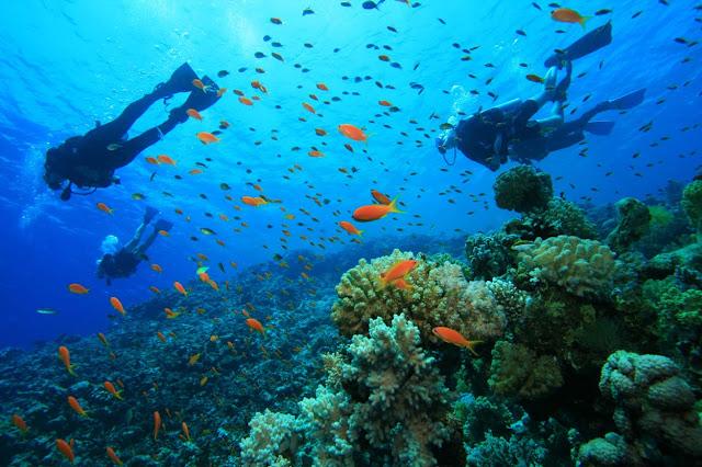 snorkeling dan diving di alam bawah laut gili trawangan