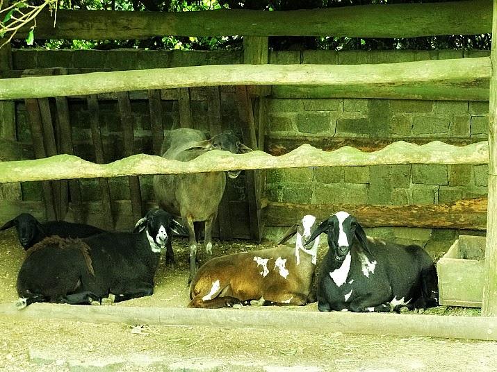 Área reservada para as ovelhas, no Parque Santur