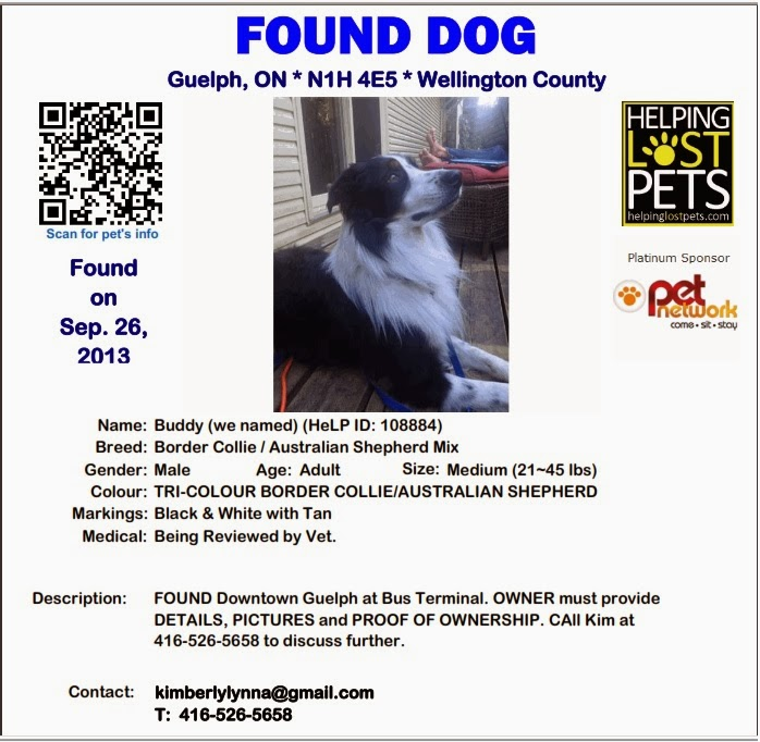 Royal City Animal Hospital Lost Dog found in Guelph - Lost Dog Flyer Examples