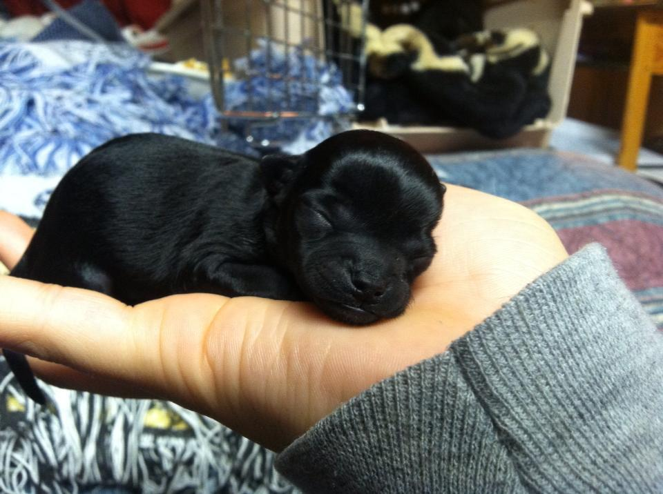 Cute dogs - part 211, cute dog photos, best dog images