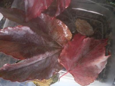 diy-hojas-secas