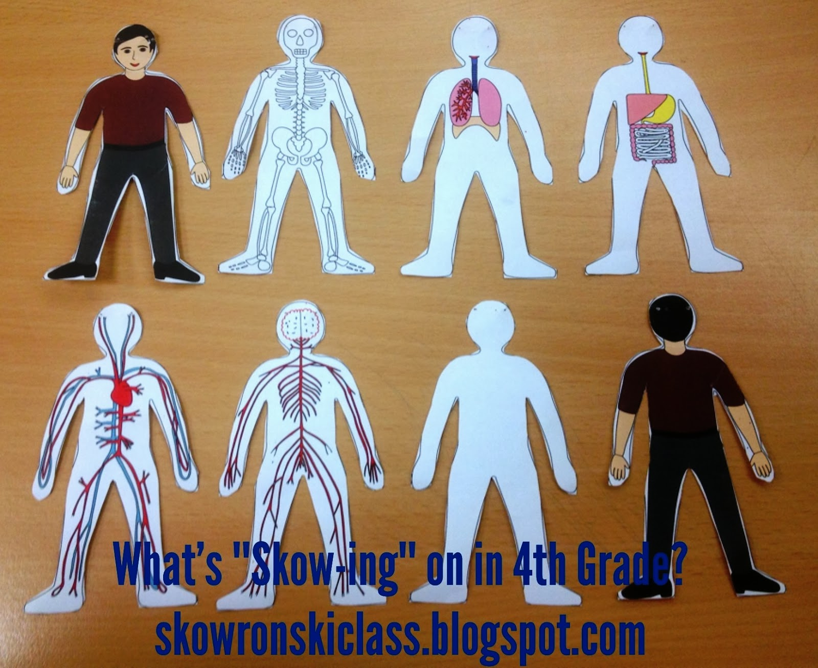 What S Skow Ing On In 4th Grade Our Human Body Man