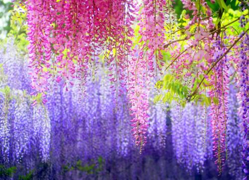 hoa tu dang y nghia