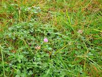 Inilah 4 Perbedaan Rumput dan Legum