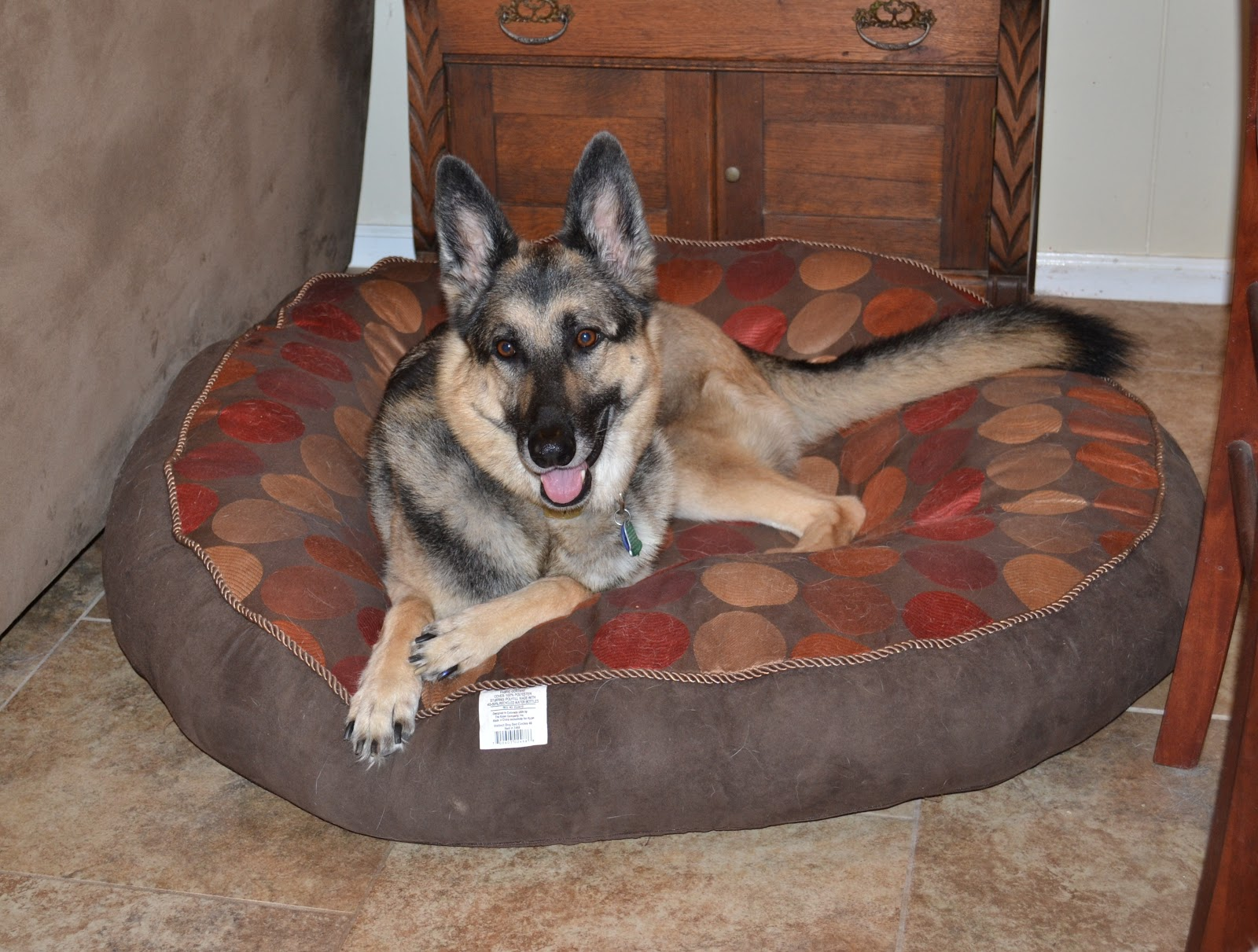 Turke the German Shepherd Dog