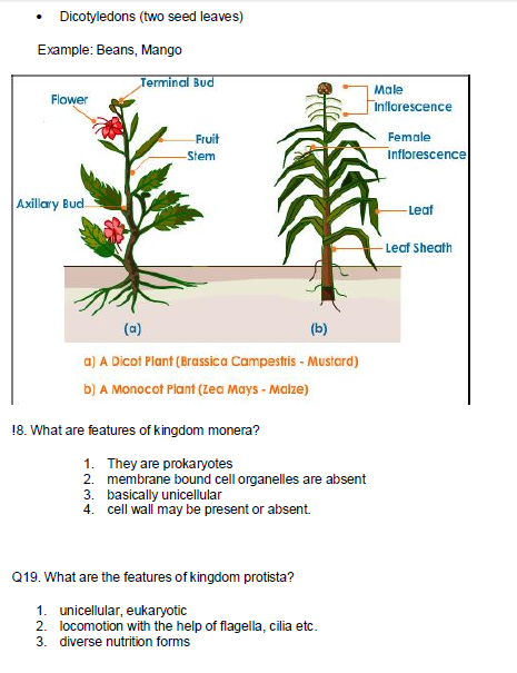 Diversity  classification of living organism,HOT Questions with answer,difference between plants and animals,