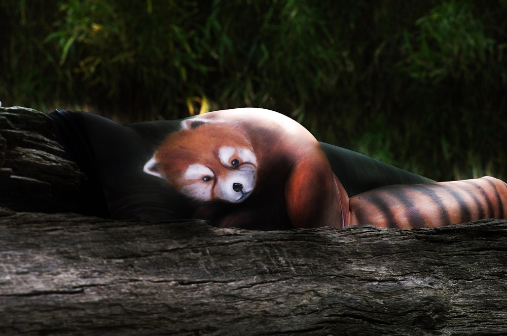 09-red-panda-Gesine-Marwedel-Body-Painting-on-Location-including-Water-www-designstack-co