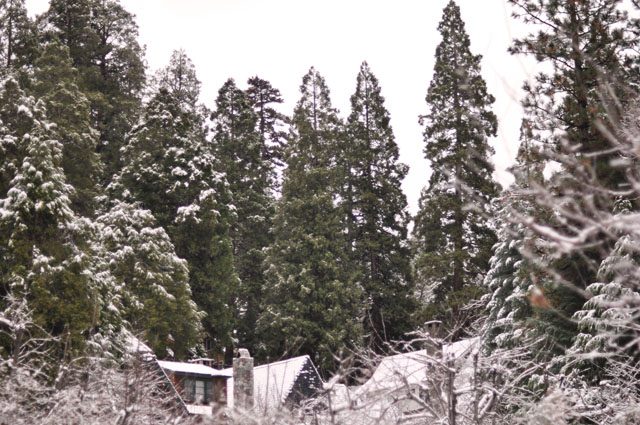 snowy rooftops and trees