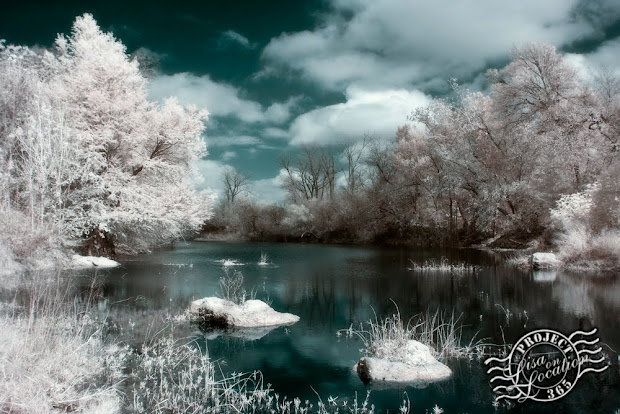 365 photo challenge, Lisa On Location photography, New Braunfels, Texas. Blanco River, Blanco Shoals Natural Area, San Marcos, Texas. False-color infrared