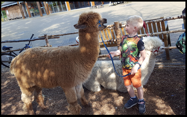 Having a chat with the Alpaca at Sandy Balls, like you do!
