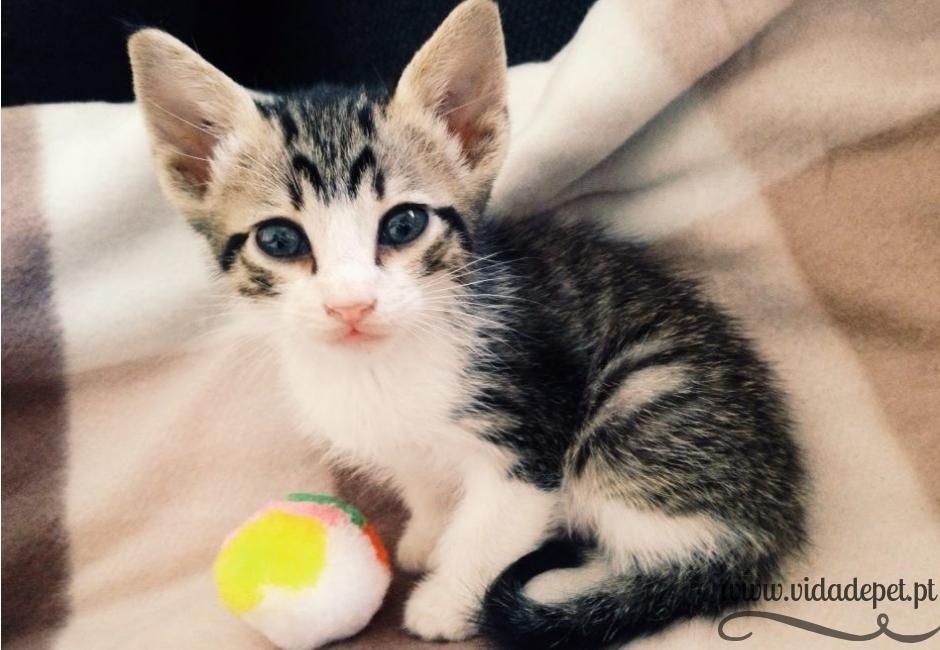 Xavi + gatos voadores+ blogue de animais de estimação + portugal + português + vida de pet + pedro e telma + partilha de histórias reais