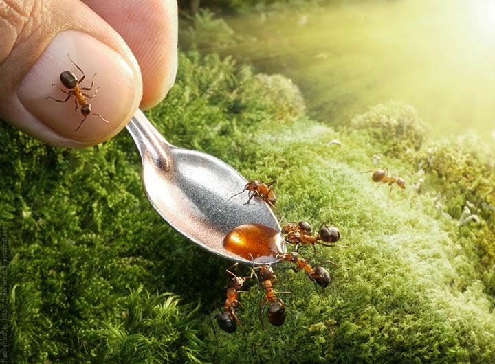 عجائب النمل