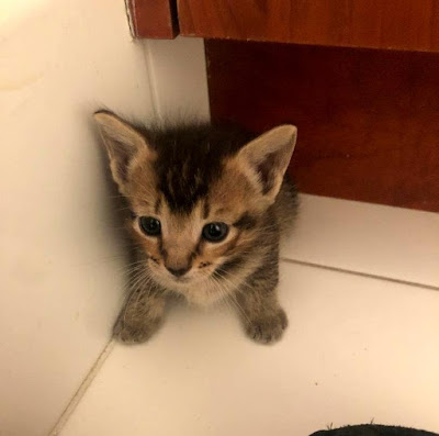 Tiny Tigger rescue kitten