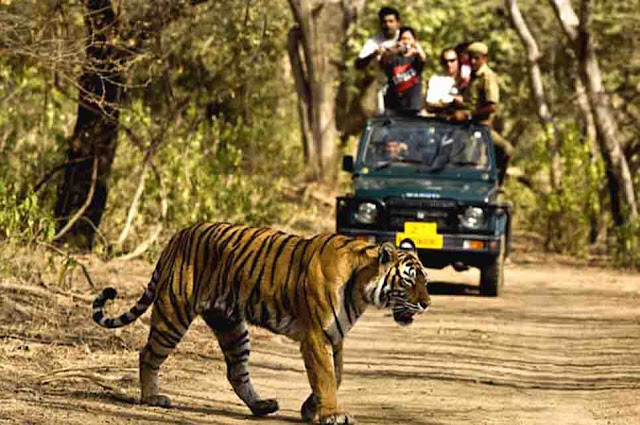 Jungle Safari in Jim Corbett National Park