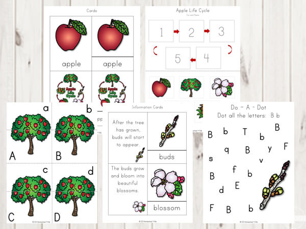 apple-life-cycle-letter-find-uppercase-lowercase-fall-science