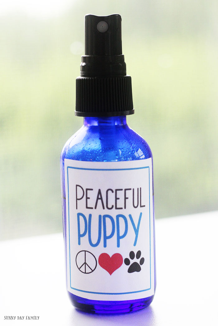 Make a DIY dog calming spray for your dog's bed, crate, or the car - anywhere you need to help your dog relax! Now with FREE printable labels. Perfect for anxiety in dogs, separation anxiety, crate training, and more. Natural remedy for dogs that keeps them calm when they are stressed. #essentialoils #dogmom #doghealth #homemade