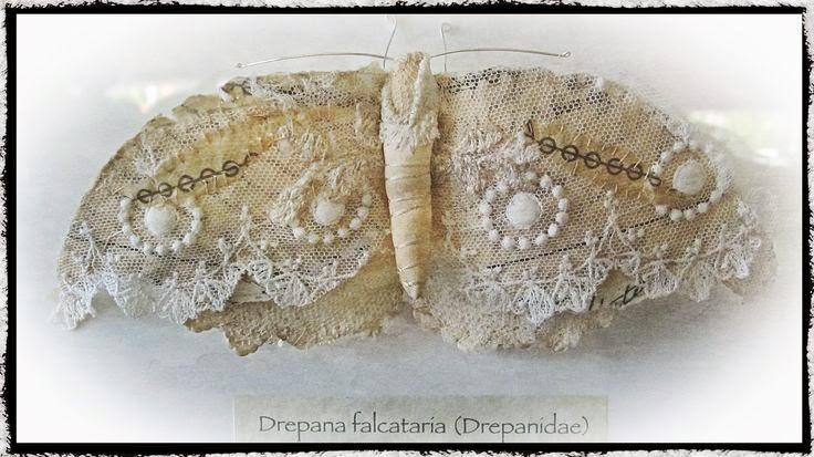 koronkowy motyl