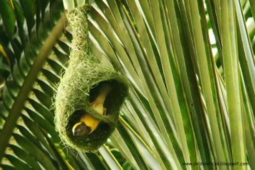 beautiful birds nests sri lanka funny images
