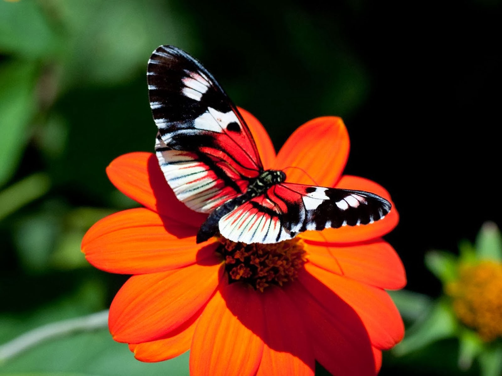 wallpapers: Butterfly Desktop Backgrounds
