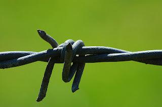 kawat duri, kawat duri silet, barb wire, razor wire, pagar brc, jual pagar brc, harga pagar brc