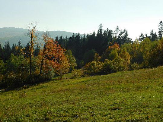 Polana pod leśniczówką na południowym stoku Trzebuńskiej Góry.