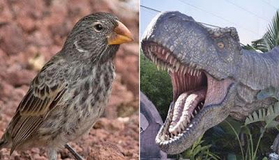 Burung Kecil Ini Memiliki Gigitan Lebih Kuat Daripada T Rex