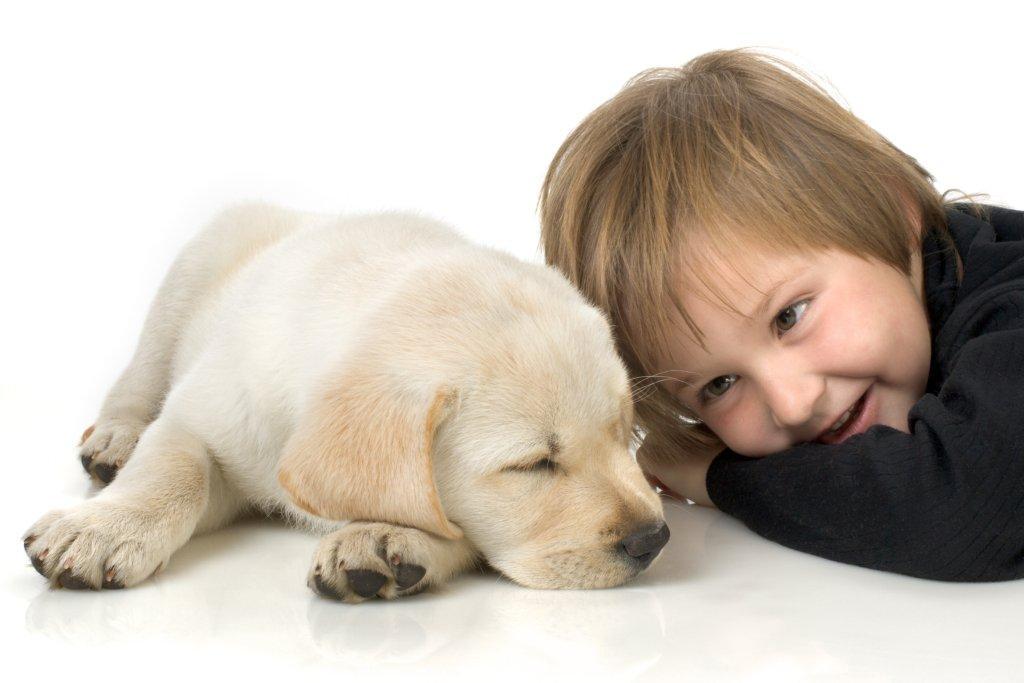 animals  Cães e Crianças Cuidasdos Importantes