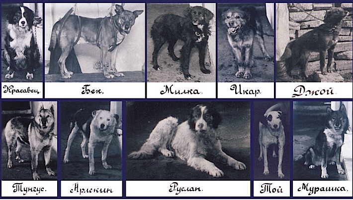 namn på små hundar