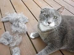 Como deshacer las bolas de pelo del gato