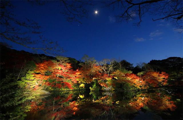 The beautiful colored leaves at Mifuneyamarakuen, part around Mt.Mifune, Takeo City, Saga Pref.