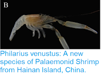 http://sciencythoughts.blogspot.co.uk/2016/09/philarius-venustus-new-species-of.html