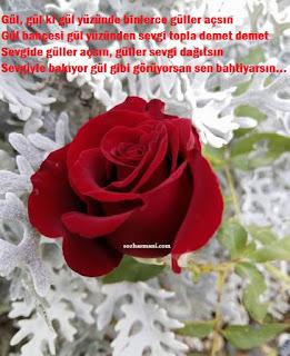 aşk sözleri, bahtiyar kimdir, bülbül, bülbülün güle aşkı, çiçekler, demet demet gül, gül ile ilgili güzel sözler, gül ile ilgili cümleler, gül ile ilgili dini sözler,gül bahçesi, resimli sözler,