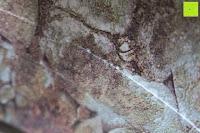 Linie: Yoga Rad »Giada« in verschiedenen Graffiti-Designs zur Verbesserung der Flexibilität bei Yogaübungen. Ideales Yogazubehör (engl. Yoga Wheel) zur Steigerung der Intensität bei komplizierten Asanas / modernes Yogahilfsmittel für Yogis die einen sportlichen Yogastil bevorzugen : Maximalgewicht ca. 120kg / Durchmesser ca. 33cm