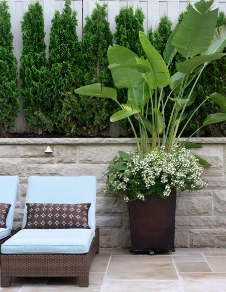 Elegant Nest: Outdoor Potted Plants...