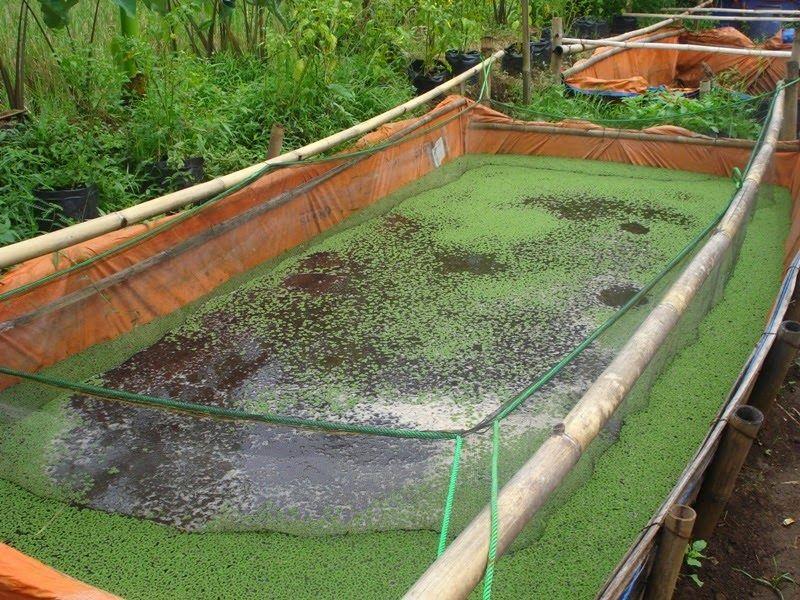 Penyebab Ikan Lele Tidak Mau Makan Dan Cara Mengatasinya