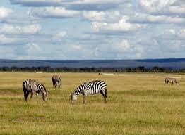 5 Pola Interaksi dalam Ekosistem