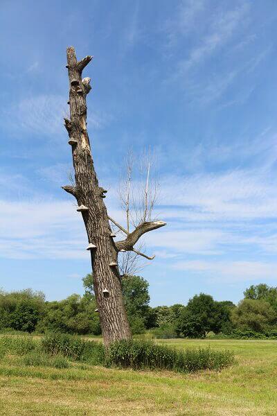 Toter Baum mit Baumpilz-Gemälde / eigene kleine Welt