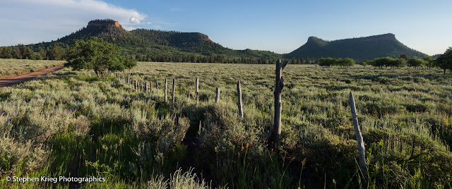 Bears Ears from mountain meadow on Manti-La Sal National Forest, Utah.