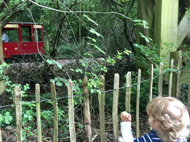 train-and-toddler-waving-at--Perrygrove-Railway