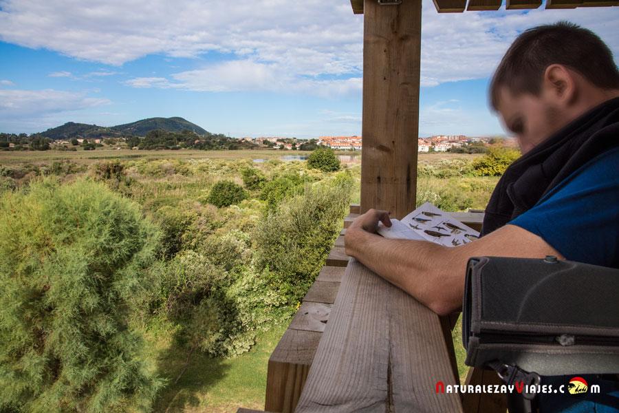 Birdwatching Noja, Cantabria