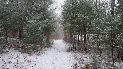 even in the snow, the woods are lovely at DelCarte