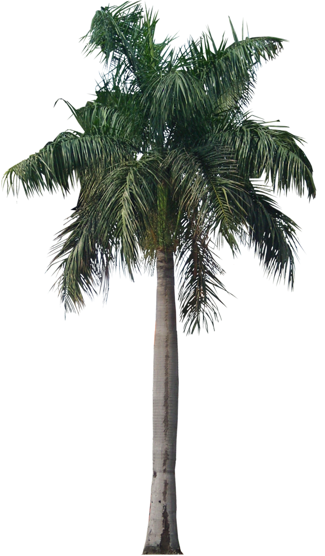 Tutup Kaca: Palm & Coconut Trees Texture