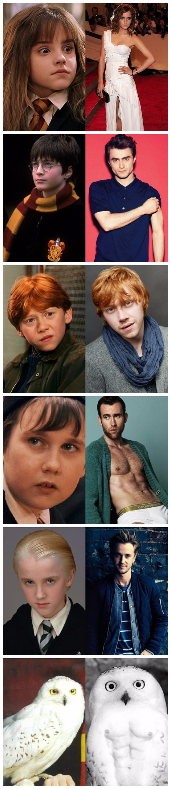 Funny Harry Potter Cast Then And Now Picture Collection